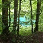Kristallblaues / türkisfarbenes Wasser des Christles-See bei Oberstdorf