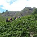 Oberstdorf 2012: herrliches Wanderwetter und dichte Vegetation auf dem Weg zur Kemptner Hütte