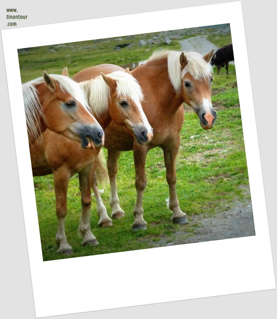 3 Pferde stehen still für ein Foto