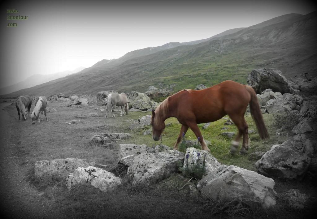 Da steht ein Pferd auf dem Berg, ja ja ein Pferd auf dem Berg ...