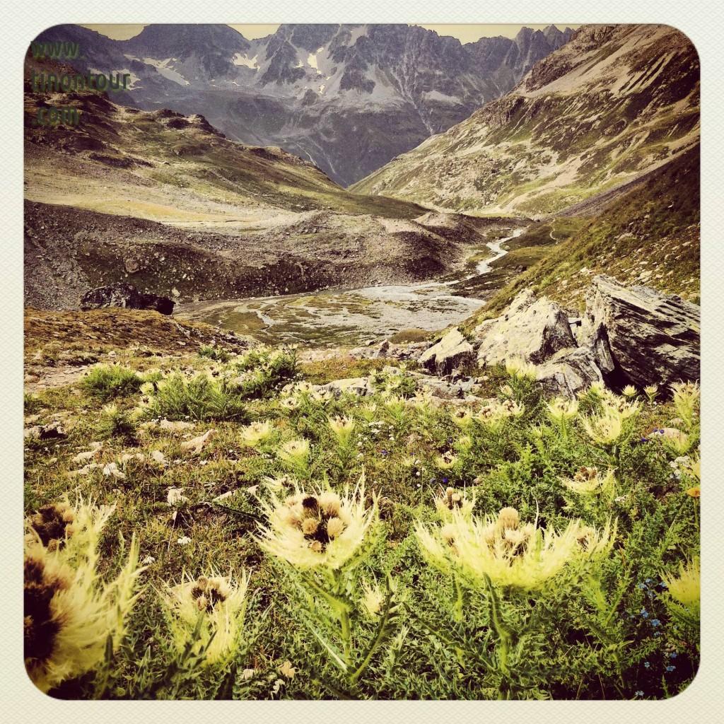 Blick in Richtung Jamtal hinweg über Distelblumen