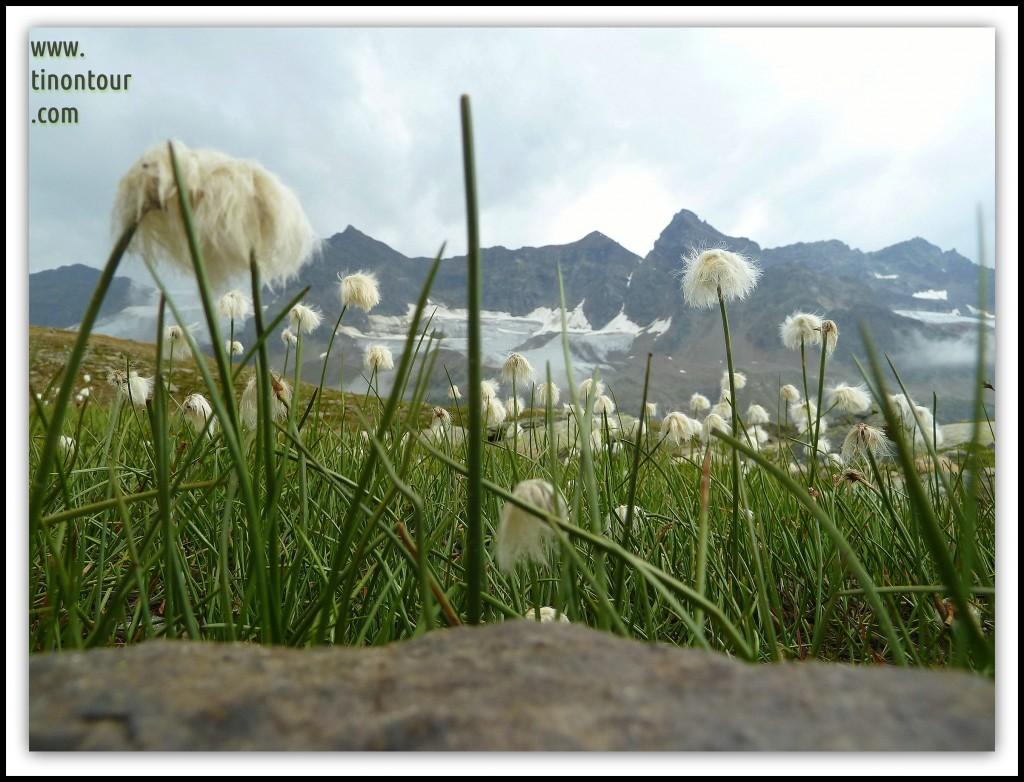Almwiesen und im Hintergrund der Gletscher Piz Buin