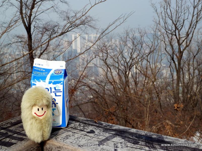 Puffbohne und im Hintergrund die Stadt