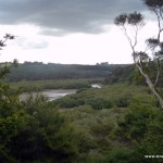 Blick über den Wald bei Paihia