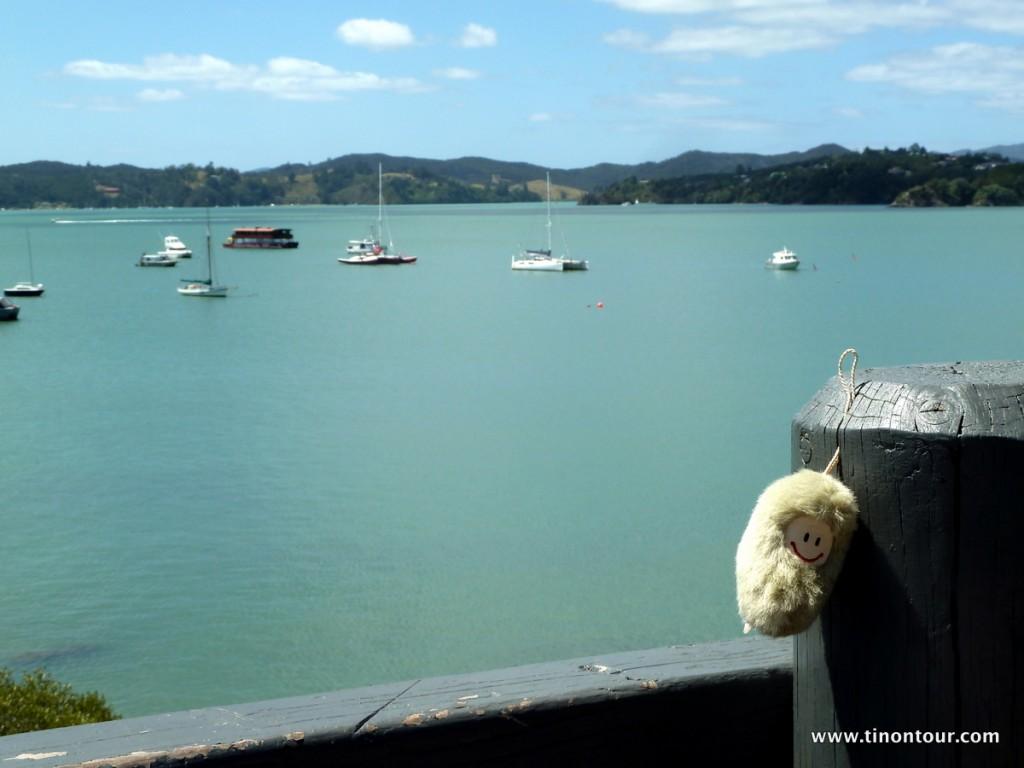 Puffbohne am Hafen von Paihia
