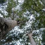 Blick aus dem Kauri Wald