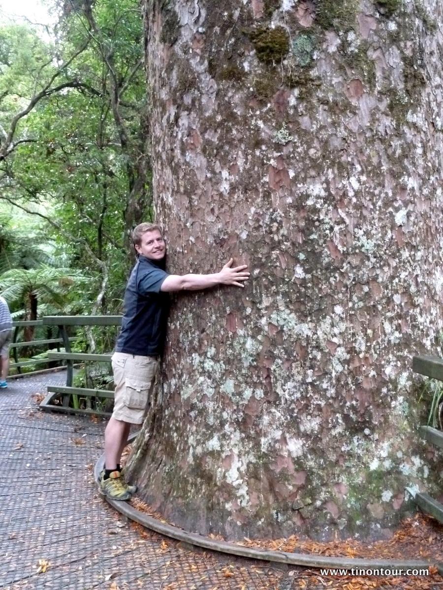 Tino umarmt einen Kauri Baum