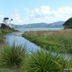 Auf meinem Weg von Whitianga zur Cooks Bay