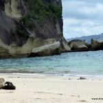 Lonely Bay - ganz alleine war ich nicht hier ... die Puffbohne hat mich begleitet