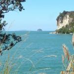 Auf meinem Weg vom Cooks Bay zurück zur Fähre nach Whitianga