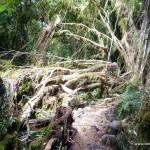 Regenwald um den Franz Josef Gletscher