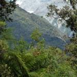 Regenwald und Gletscher - Franz Josef Gletscher in Neuseeland
