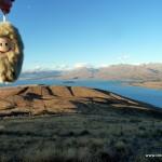 Puffbohne am Lake Tekapo