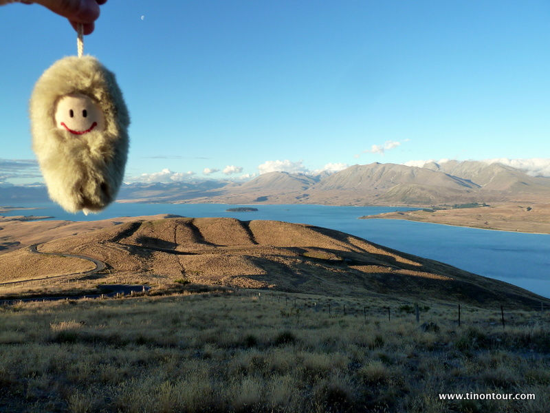 Puffbohne am Lake Tekapo