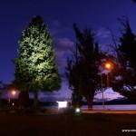 Beleuchteter Baum