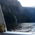 Puffbohne im Milford Sound