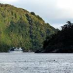 Delphine im Milford Sound
