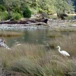 Vogelparadies am Milford Sound