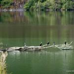Vogelparadies Milford Sound