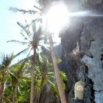 Puffbohne mit Palmen im Sonnenschein
