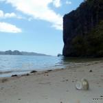 Puffbohne mit Muschel am Strand