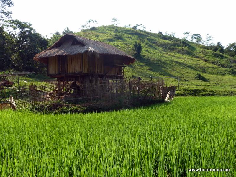 Haus eines Försters im Reisfeld