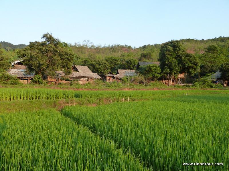 Blick von den Reisfeldern auf das Dorf