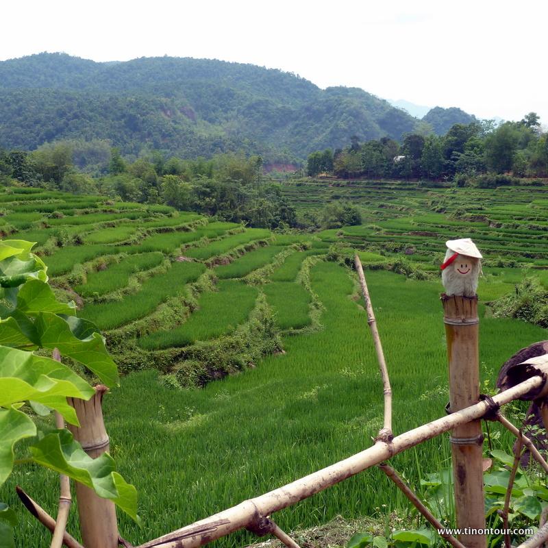 Fast nicht zu erkennen - die Puffbohne mit traditionellen Reishut und im Hintergrund die Reisterrassen