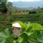 Puffbohne auf dem Blatt vor den Reisterrassen