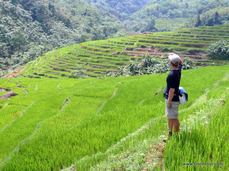 Reisfelder / Reisterrassen so weit das Auge reicht