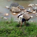 Fraum beim Sammeln