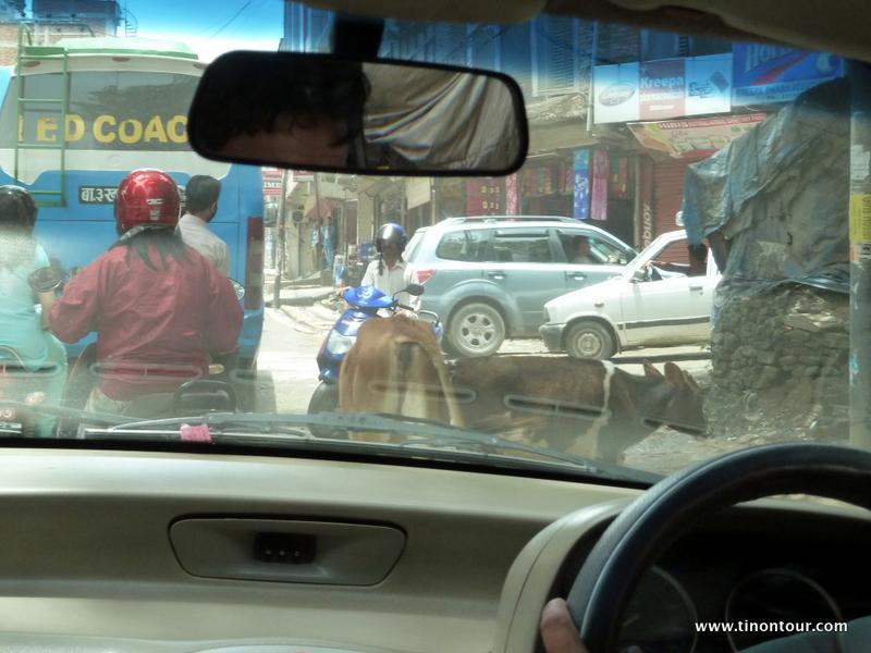 Auf der Fahrt mit dem Taxi vom Flughafen Kathmandu (sehr klein) zum Hostel werde ich schon auf diese Stadt eingestimmt. Leider sehr viel Dreck, Armut, Chaos und eben auch Kühe auf der Straße.