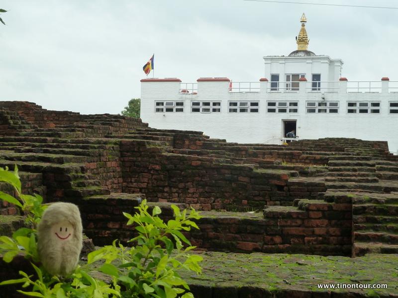 Die Puffbohne an der Geburtsstelle von Buddha in Lumbini (Nepal)