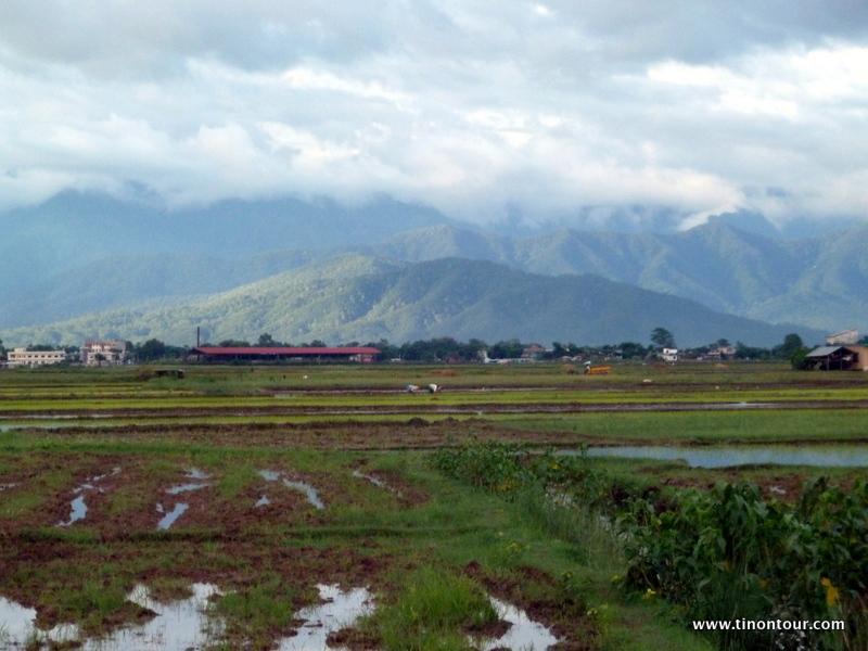 Reisfelder und im Hintergrund (leider wie eigentlich immer) von Wolken bedeckt die Gebirgskette des Himalaya