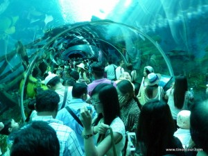 Es ist definitiv voll im Aquarium auf Sentosa - aber meiner Meinung nach auf jeden Fall ein Besuch wert.