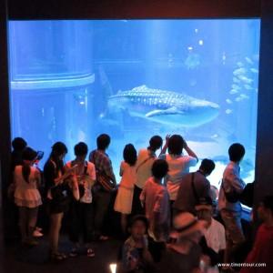 Das KAIYUKAN – Osaka Aquarium zählt zu einem der schönsten Aquerien weltweit