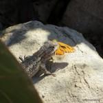 leckeres Mittagessen für diesen kleinen Gecko