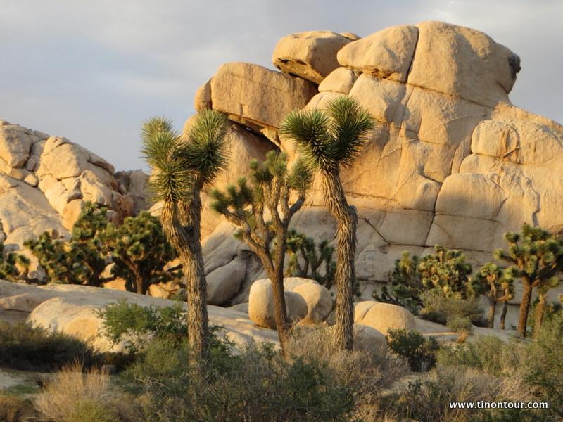 Sehr ausgefallene Landschaft hier in Joshua Tree Nationalpark