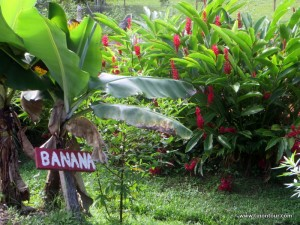 Liebevolle Beschriftung an Bäumen und Sträuchern - zugegeben einen Bananenbaum hätte ich auch so erkannt *gg*
