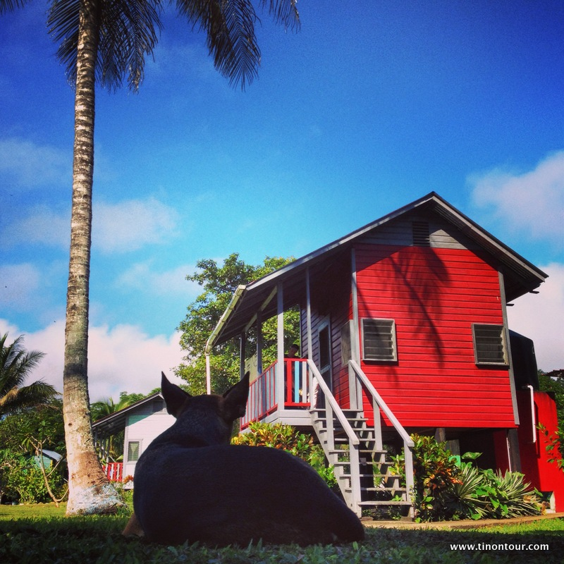 Eine kleine farbige Oase mitten im Dschungel von Belize: die Lower Dover Jungle Lodge