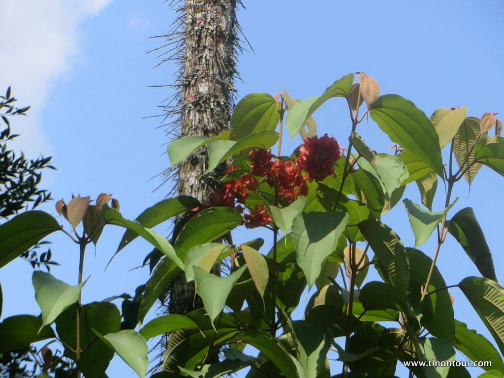 weltreise-2013-19-kolumbien-08-manizales-kaffeeplantage_19-IMG_6971