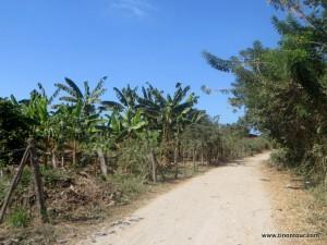 Der Weg von der Hauptstraße zum Hostel und Strand ... Erholung ich koooooommmeeee ...