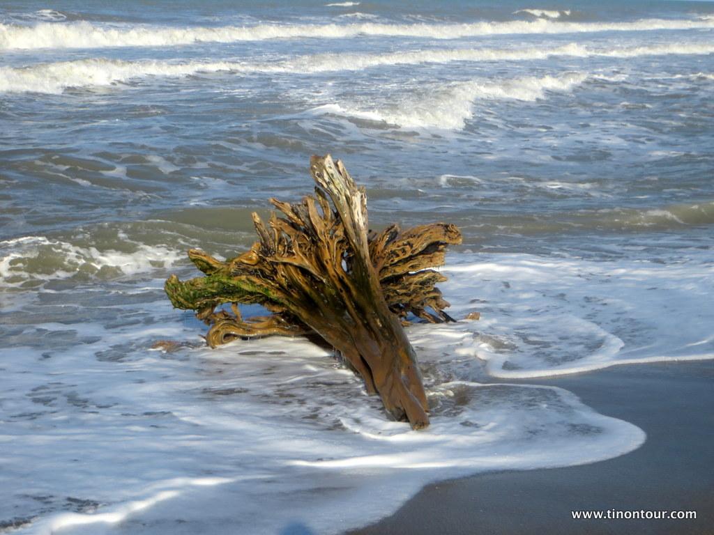 """Ich liebe Bilder mit """"Strandgut"""" ... frag nicht wie viele Fotos ich von diesen und anderen Baumstämmen gemacht habe ..."""