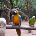 weltreise-2013-20-brasilien-06-iguazu-wasserfaelle_14-P1010313